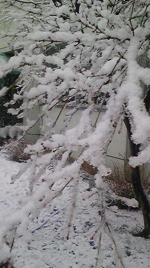 大阪で大雪!